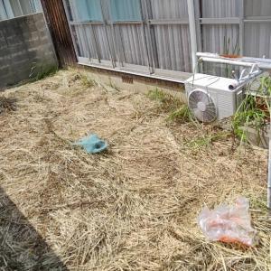 この間は、金属の刃先の刈払機で雑草を刈りましたが、