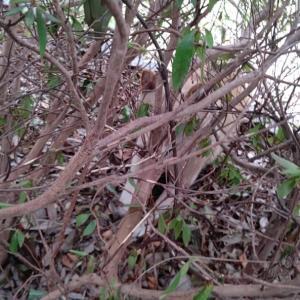 枝は植込みの中に差し込んで、風で飛ばないように