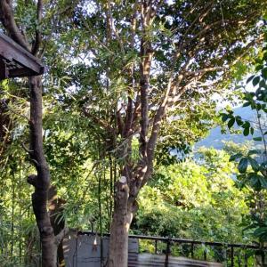奥の大きな庭木の枝を切っていたら、駐車場が枝木で
