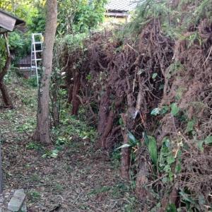 垣根の上に伸びすぎた枝も、奥のところを少し残すだけに