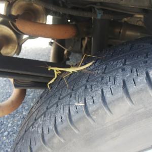 後タイヤをふと見ると、カマキリの赤ちゃんが、