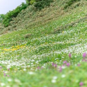 花の百名山 富良野岳 稜線を行く