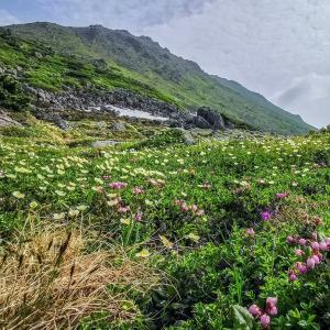 わたしの夏休み2021 トムラウシ山山頂から下山