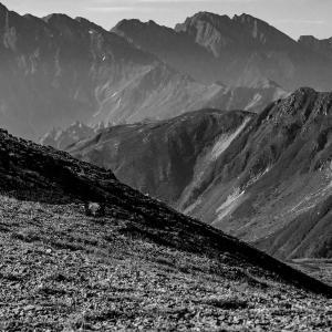 黒部源流の秘峰を巡る その11  水晶岳山頂に立つ