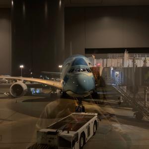 念願のフライングホヌに乗って4年ぶりのオアフ島へ!行きの機内で観たのはまさかの?