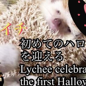 ハロウィンスペシャル〜youtubeに投稿しました!出演はライチPosted on youtube for Halloween Special!  Appearance is lychee