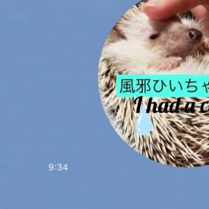 ボクたちのLINEスタンプ新発売!ハリネズミのミントとライチのLINEスタンプ第3弾! Our LINE stamp new release!  Hedgehog mint and lychee LINE stamps 3rd!