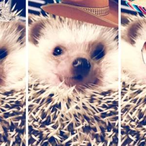 世界の皆さん、こんにちは! Everyone in the world!  Hello!