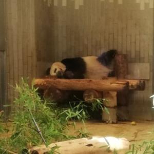 上野動物園のパンダ(シャンシャン)返還間近!