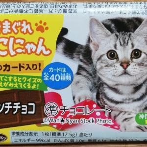 駄菓子の猫ちゃんカードがかわいい