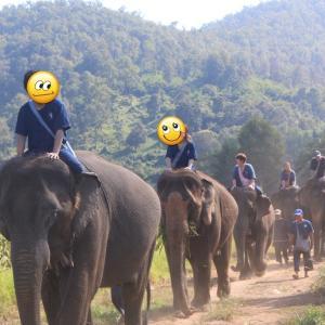 超おすすめ!チェンマイの『タイ エレファントホーム』で象乗り1日体験コース (予約方法から当日の流れまで詳しく)