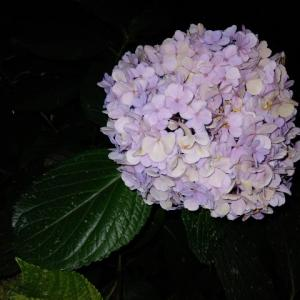週明け日記 8/11 【猛暑日】
