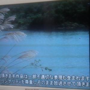 テレビ日記 8/19