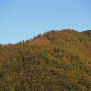 紅葉越しに望む秋色の大文字