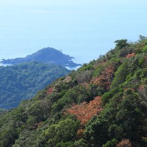 熊野古道・長井坂から望むすさみの海