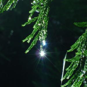 初秋、あるいは晩夏の珠玉~雫のプリズム~