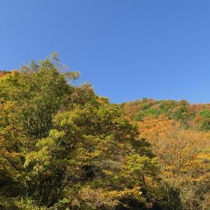 京都・八瀬の秋色スポット