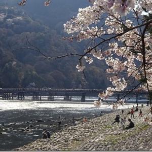 嵐山渡月橋と桜のコラボを4つのスポットで撮ってみた【渡月橋と桜・近隣撮影スポットも】素人による比較写真で後はお任せします
