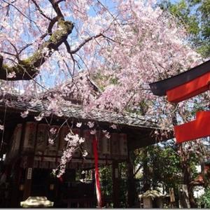 枝垂桜を独り占めできるかも【水火天満宮】御利益いっぱいの日本最初の天満宮の4つのうちの1つ