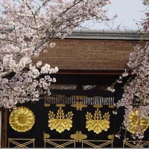 広い境内には穴場スポット沢山あり【醍醐寺】桜の名所だが、四季を通じて楽しめます<ランチ、アクセス、駐車場、駐輪場詳細情報あり>