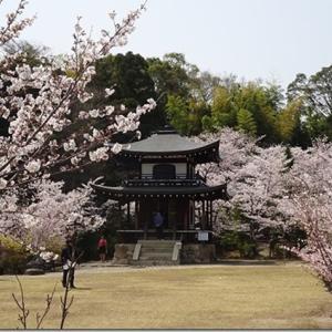 桜が鳳凰の翼の様に広がる風景を見れる【勧修寺】ユーモア、独創性あふれるお寺<ランチ、アクセス、駐車場・駐輪場詳細情報あり>