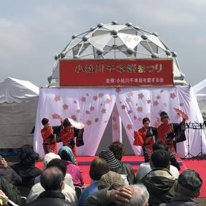 小松川千本桜まつり2019行ってきた♪下町風情溢れるにぎやかなお祭り!