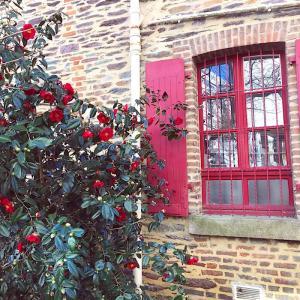 赤い窓枠とツバキ