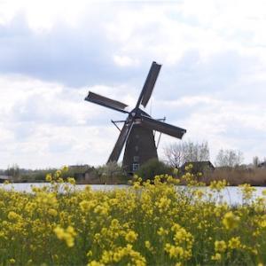オランダ旅行!4日目-Kinderdijk- ユネスコ世界遺産キンデルダイクの風車