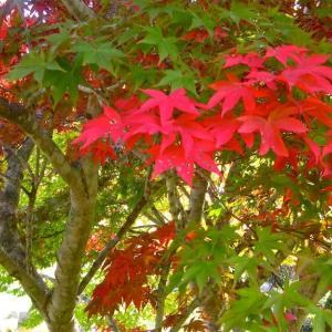 函館ダム公園〜チョビッと紅葉〜ドバッと◯◯◯