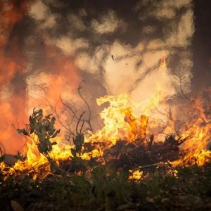 『オーストラリア森林火災』への寄付を受付けているサイト