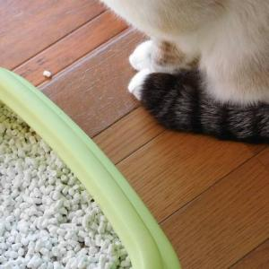 猫のスプレー対策でやっていること、やめたこと