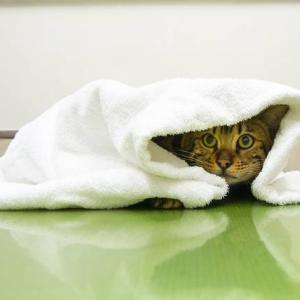 【使用感レビュー】家のタオルを片面ガーゼタオルに全取っ替え