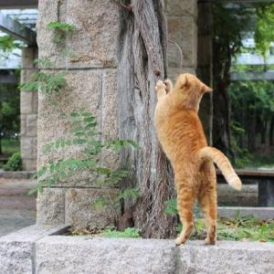 【猫の誕生日プレゼント】猫壱バリバリパッドコロコロボール
