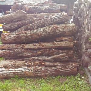 購入した原木を玉切