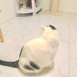 虫が怖い猫