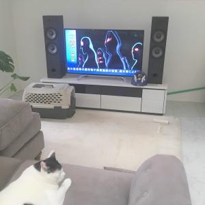 ゲゲゲの鬼太郎も憂う、多頭飼育崩壊と猫問題