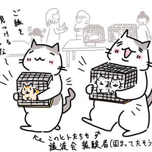 保護猫を里親として迎えたい方に◎長野市・千曲市・上田市の譲渡会情報