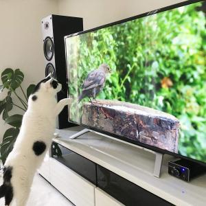 猫との暮らしを始めたい方に。出会い方や用意するものetc...