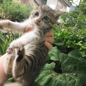 不妊化手術は絶対!猫の一斉不妊化手術のお話その1