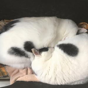 あんもなさん家の冬の夜。ぼっふぼふの猫ベッドはじめました