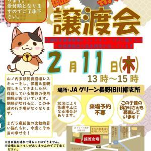 【お知らせ&拡散希望】緊急!山ノ内町の多頭飼育崩壊の猫たち里親・預かり募集中