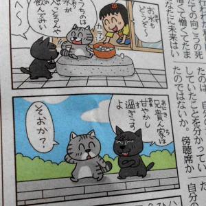 ねえ「ぴよちゃん」の日常にホットする。東京新聞朝刊4コマ。