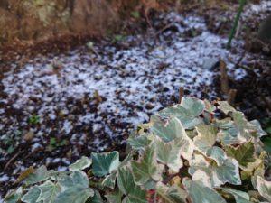 初雪と春を待っている庭のハーブたち