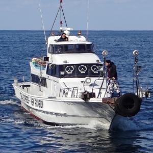 2月20日上五島 美良島ビシャゴ クロ釣り釣行