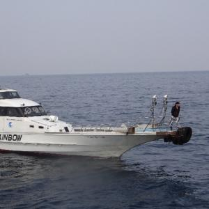 4月3日まだ終わらない美良島でのクロ釣り