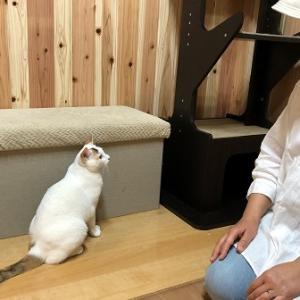 湯村温泉の猫カフェ「猫時間」さんへ