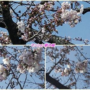 桜は咲けど ・ 瓦そば