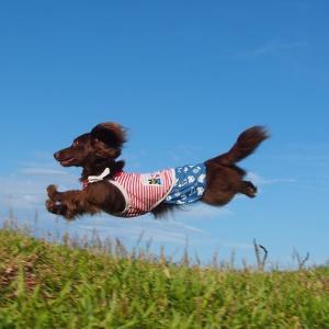 今日は何の日「キュートな日」やっぱり飛行犬マハロちゃんがキュートです