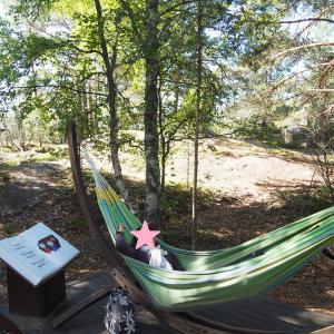 今日は何の日「木の日」& フィンランドのハンモック & マイラン遺跡公園の倒木