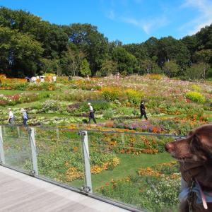 オカピ花壇と羊のジョージ 秋の里山ガーデン2019-2